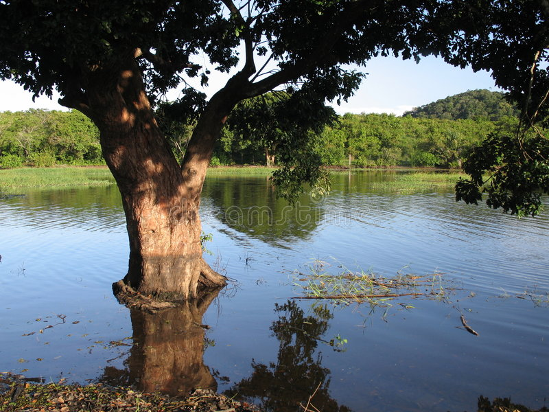 Download Tree in the water stock image. Image of tropical, lake - 474181