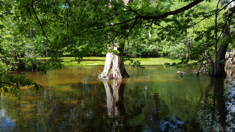 Tree in Water stock photos