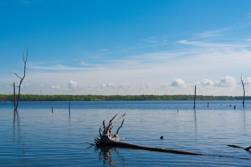 Tree In the Water. An uprooted tree lies fallen in a blue lake stock photos