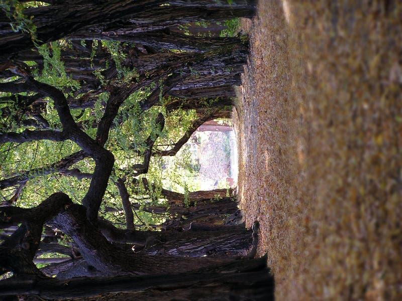 Tree way royalty free stock photos