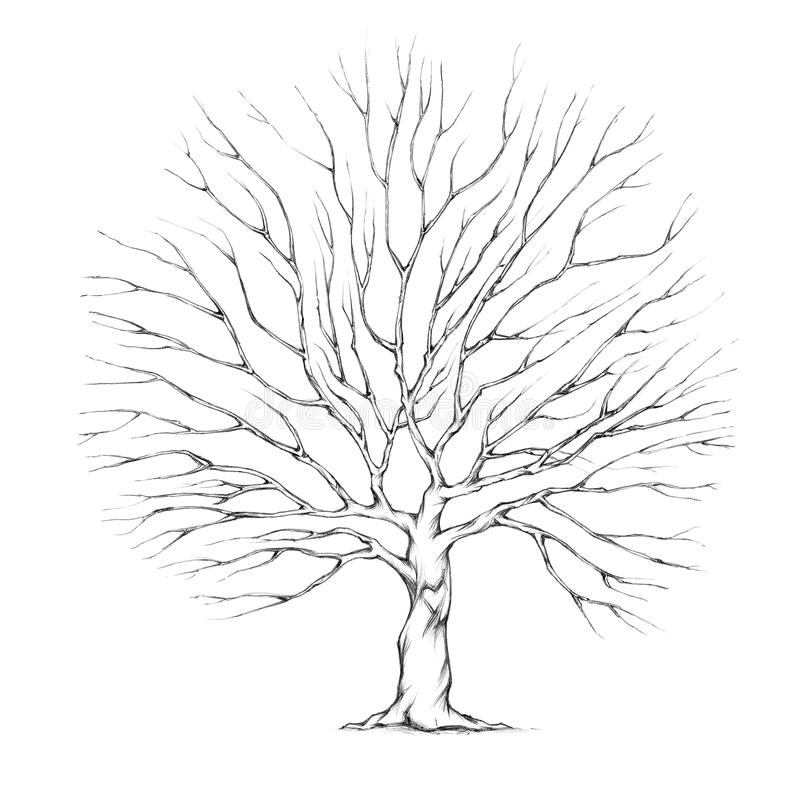 Tree for wedding couple with big tree crown vector illustration