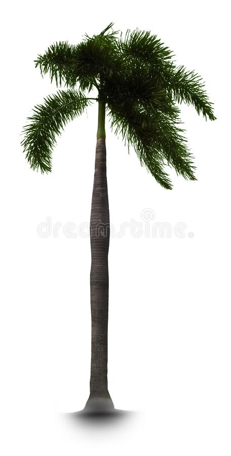 Tree with white background. Isolated royalty free stock image