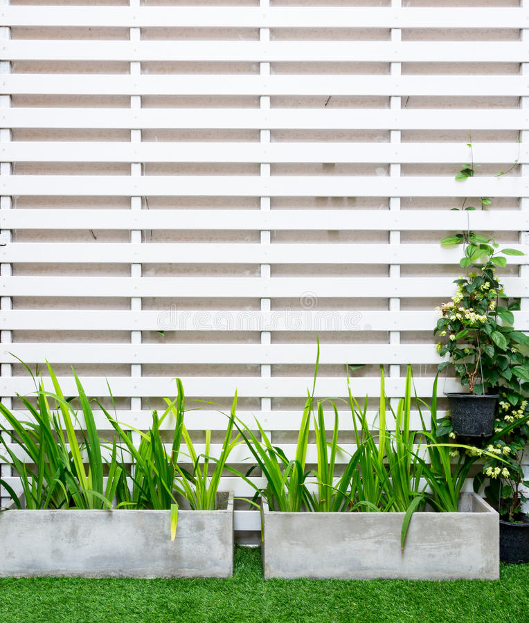Tree on white lath wall. Tree in a pot on white lath wall stock photo