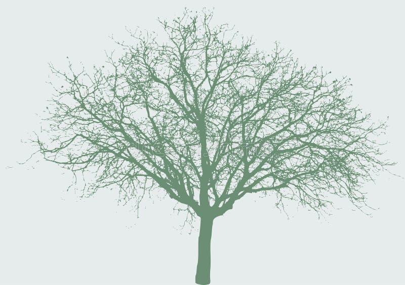 tree wide vektor illustrationer
