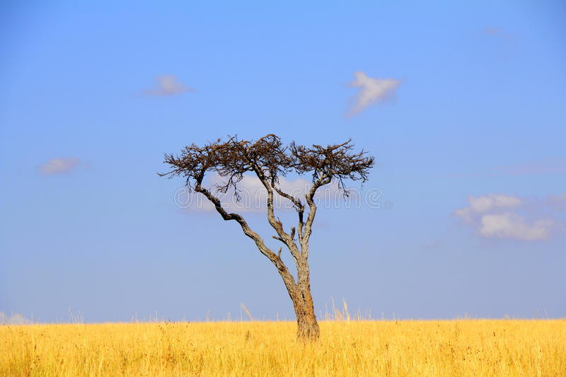 Tree in the wilderness stock photography