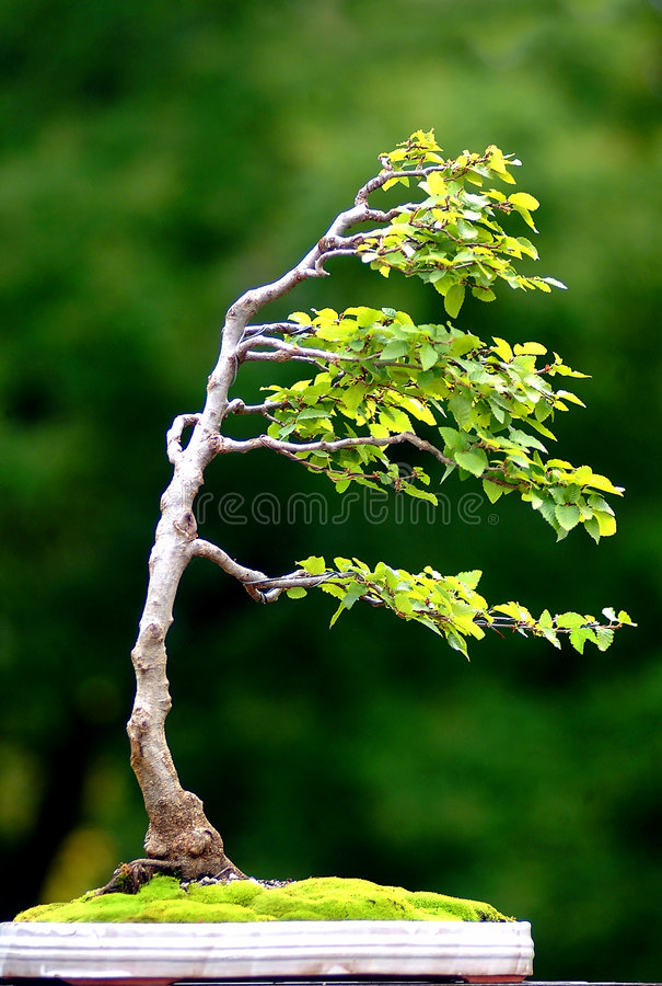 Tree On Wind Royalty Free Stock Images