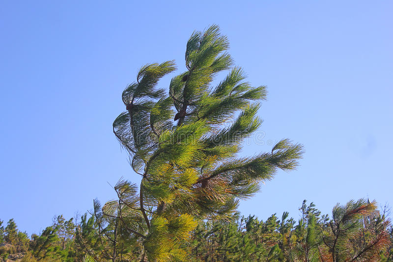 Tree in the wind stock photo