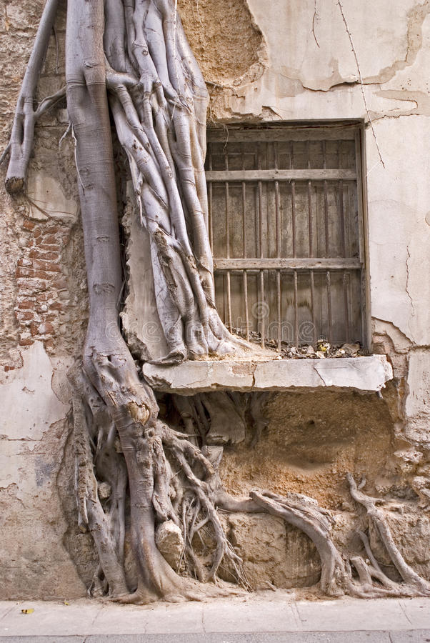 Tree in the window royalty free stock photos