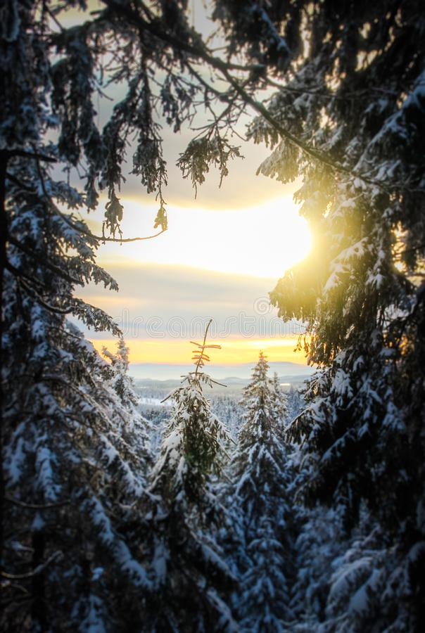 A tree window. Pine trees leave a small opening to see the setting sun of the harz mountains in germany