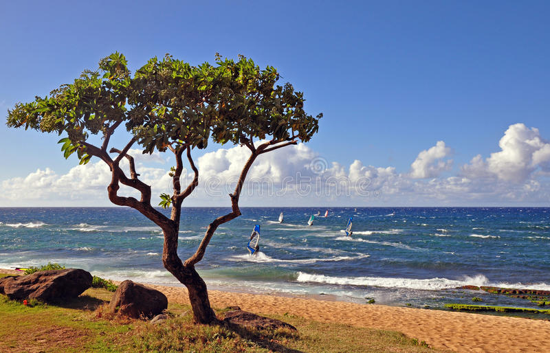 Tree and windsurfers, Maui, HI. Beach scene with tree and windsurfers in Maui, Hawaii stock photo