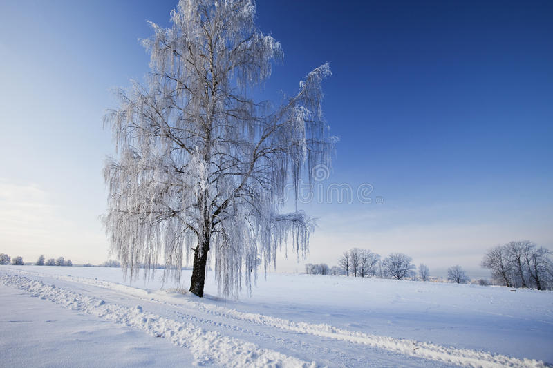Download Tree in winter stock photo. Image of front, forest, backgrounds - 19031704