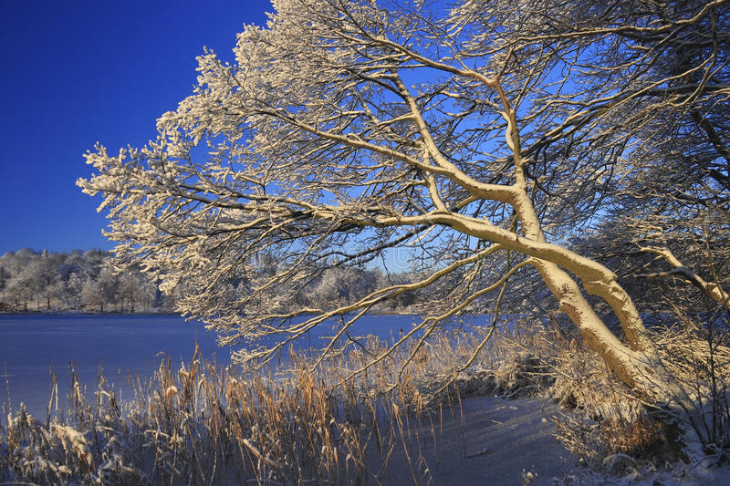 Download Tree in Winter stock image. Image of nature, tree, lake - 22987701