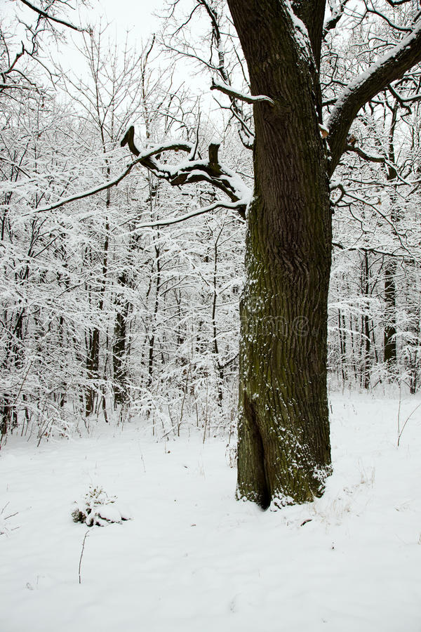 Download Tree in the winter stock image. Image of bare, bush, frozen - 26831013