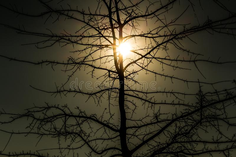 Tree in winter with bare branches and golden sunlight royalty free stock photos