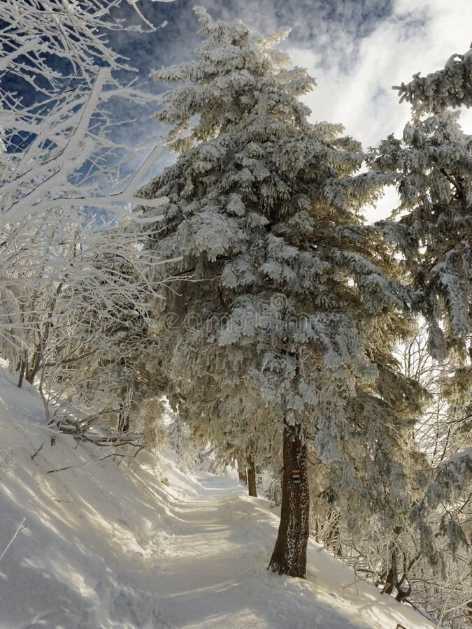 Tree at winter stock photos