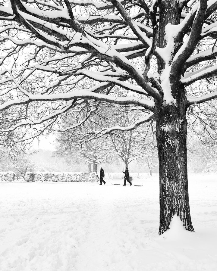Download Tree In Winter With Children And Snow Stock Photo - Image of branches, snowing: 8164606