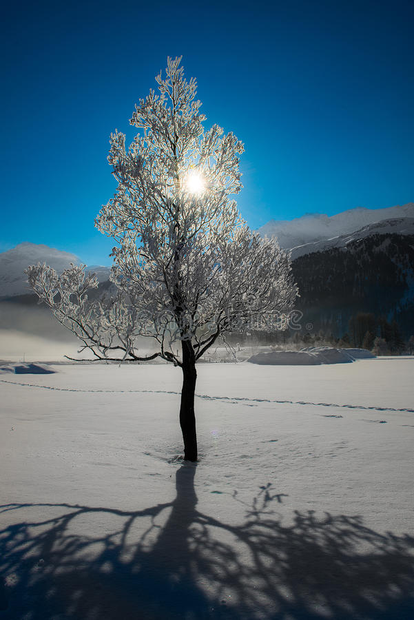 Tree in winter royalty free stock image