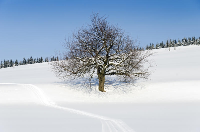 Download Tree in winter landscape stock photo. Image of sunny - 23308784