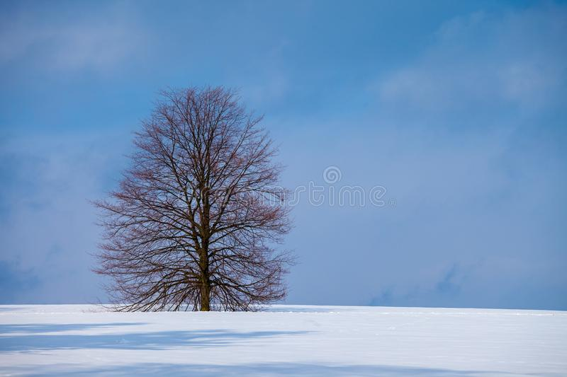 A tree in winter in a snow covered field stock photos