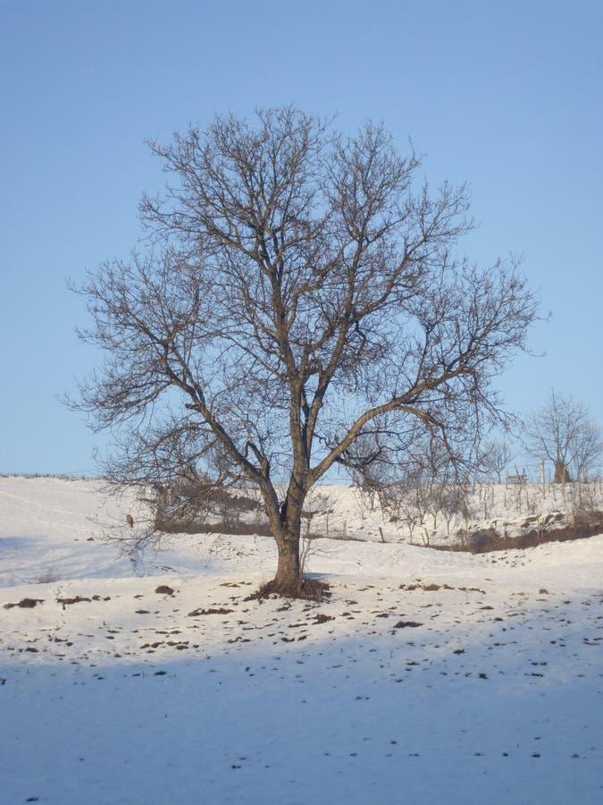 Tree, Winter, Snow, Sky Free Public Domain Cc0 Image