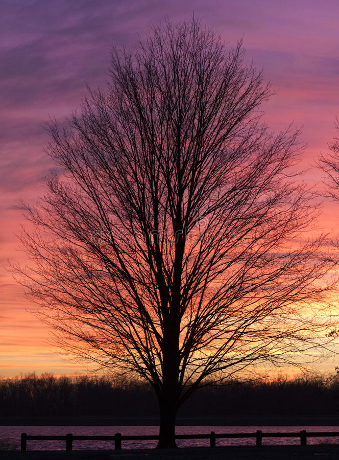 Tree in Winter Sunset stock image