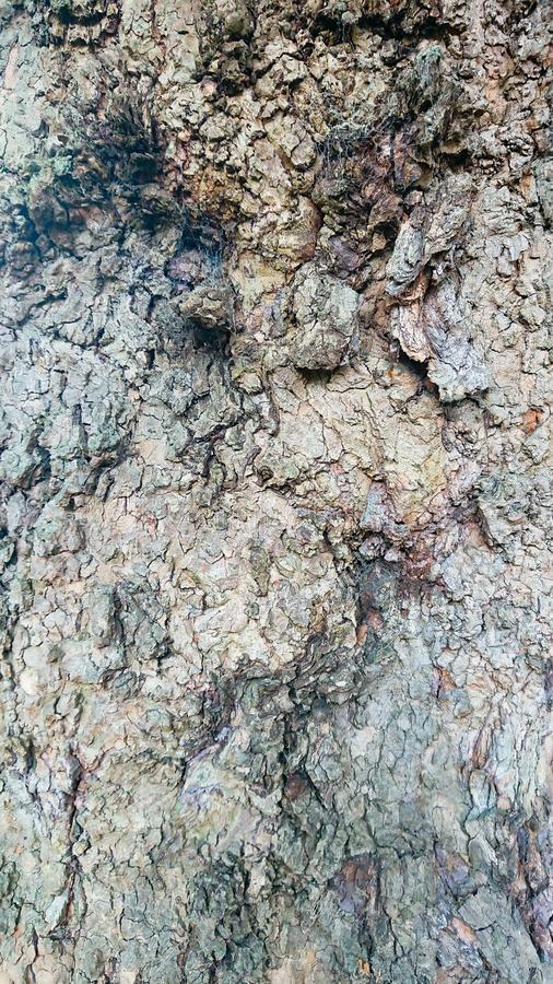 Tree wood background virtical. Closeup of tree bark. Ideal background royalty free stock image