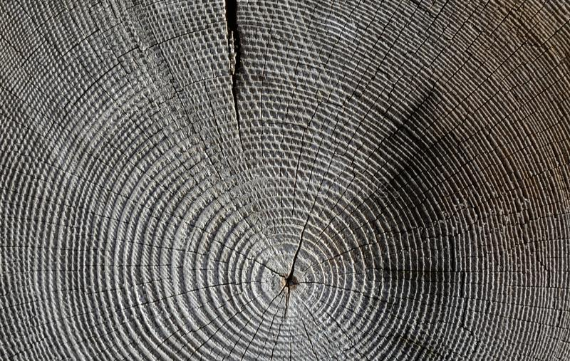 Tree, Wood, Line, Texture stock photography