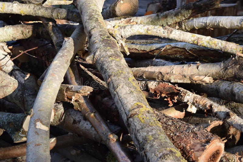 A tree. Wood stack, pretty many trees royalty free stock photo