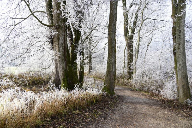 Tree, Woodland, Path, Woody Plant Free Public Domain Cc0 Image