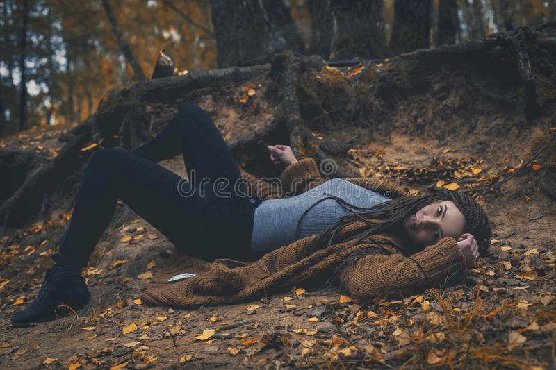 Tree, Woody Plant, Forest, Autumn stock photos