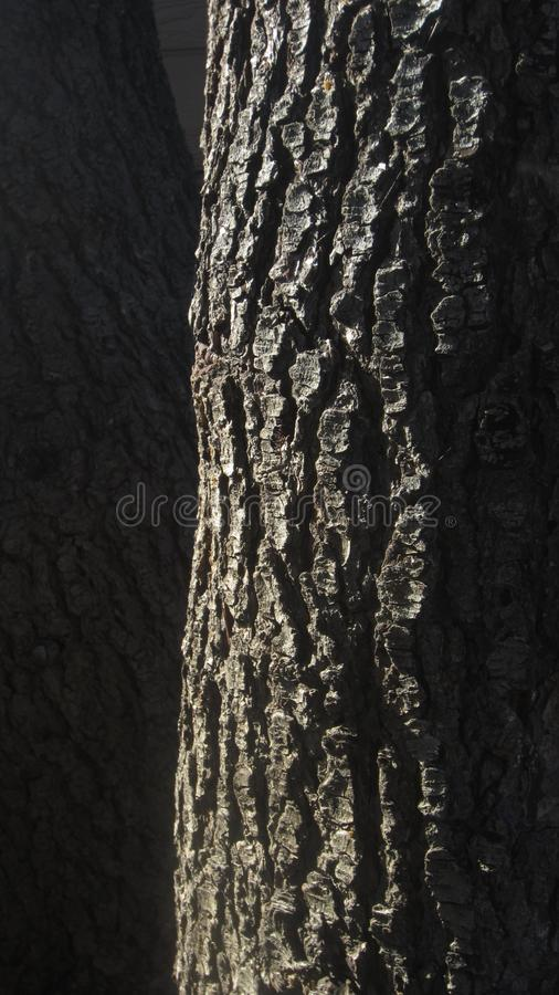Tree, Woody Plant, Trunk, Wood Free Public Domain Cc0 Image