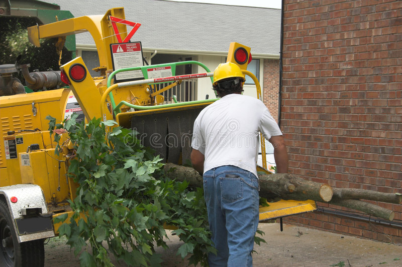 Tree worker feeding chipper royalty free stock image