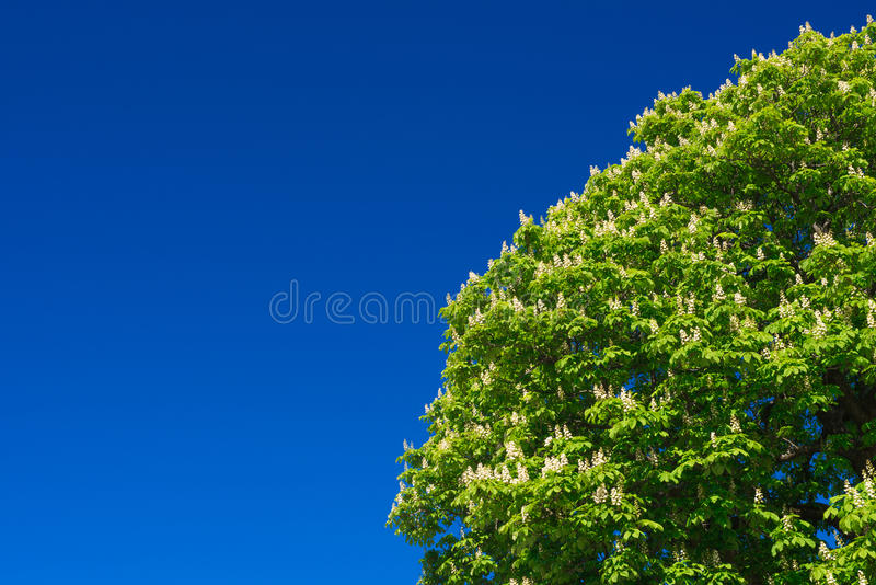 The tree wtih blue sky stock image