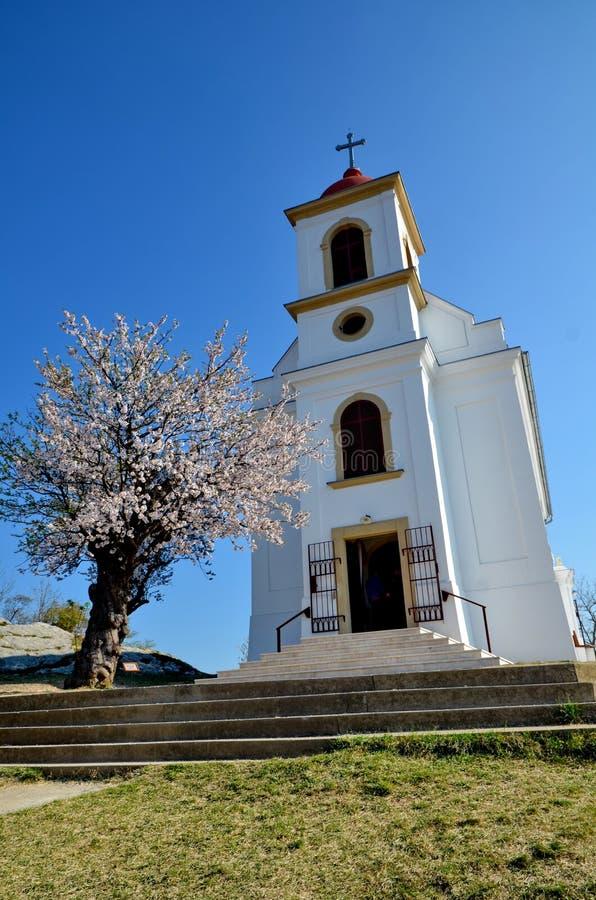 Tree of the Year - Europe 2019. Havihegy Church, Pécs, Hungary royalty free stock photography