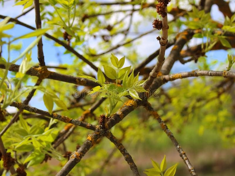 Tree young leaves green stock photo