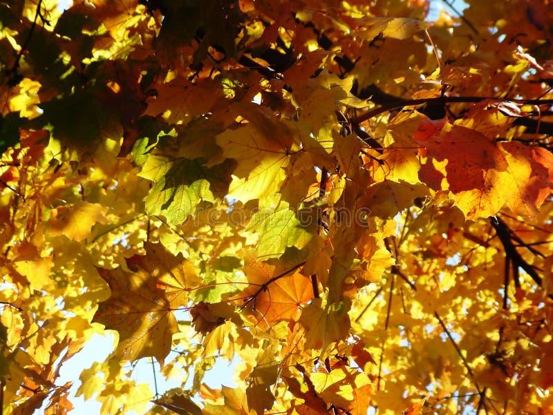 Tree11 foto de archivo libre de regalías