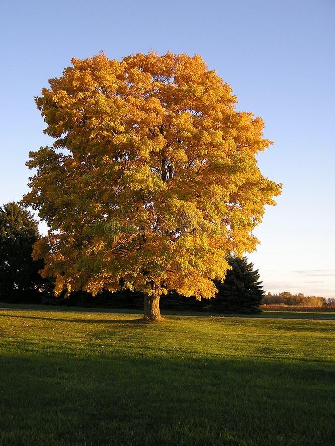 Tree2 royalty-vrije stock afbeeldingen