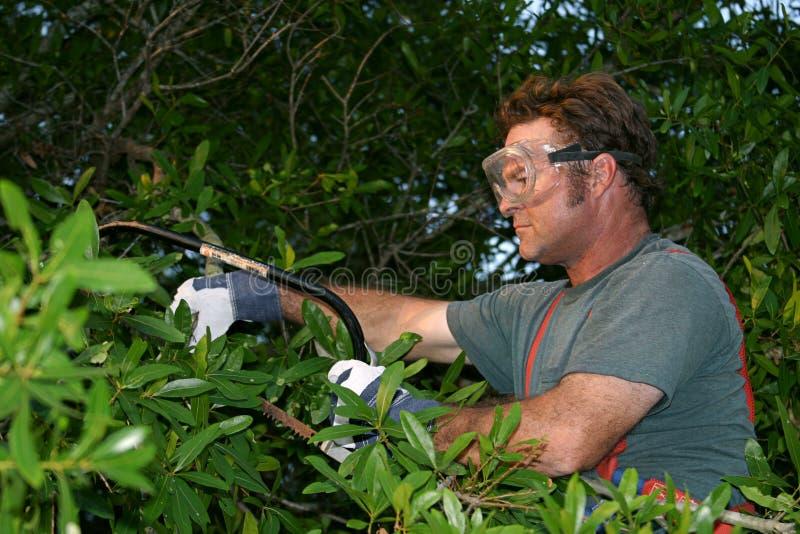 treebräm fotografering för bildbyråer
