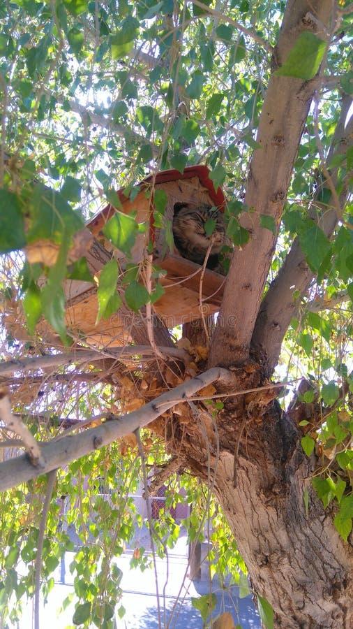 Treecat стоковые изображения rf