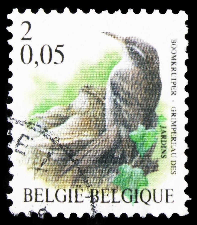 Treecreeper Certhia brachydactyla, Birds of Buzin serie, circa 2000 royalty-vrije stock fotografie