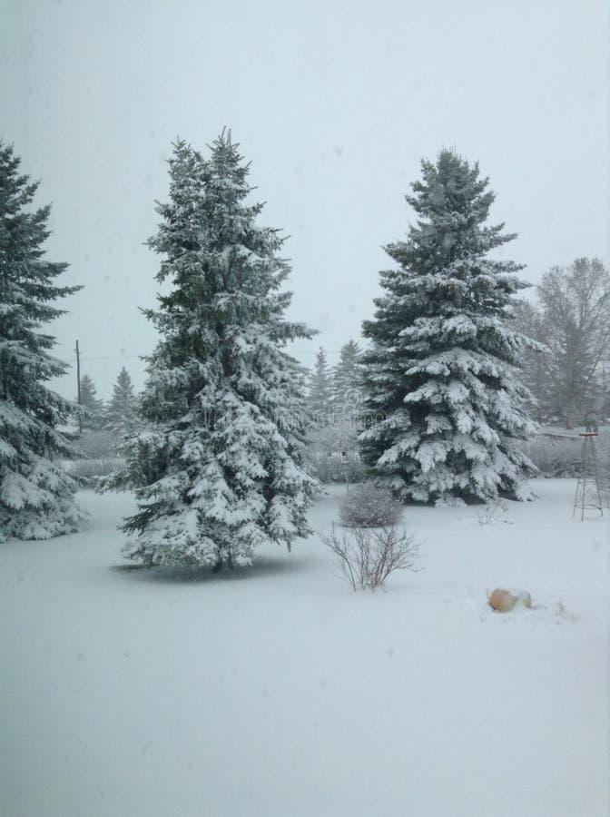 Treed που καλύπτεται στο χιόνι στοκ φωτογραφία