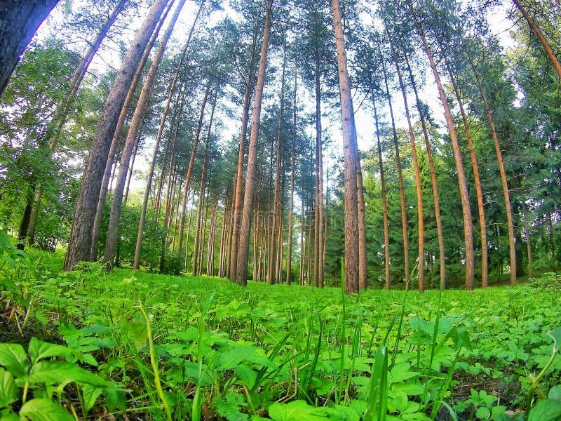 treed stockfotos