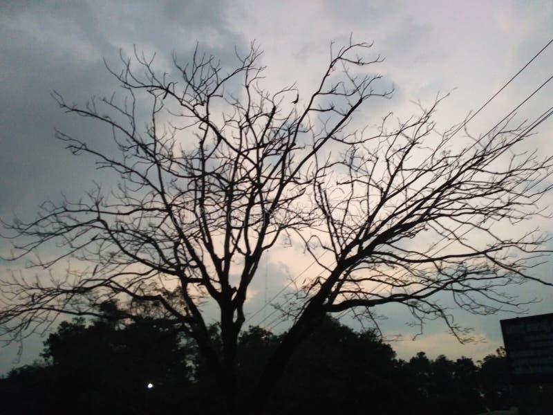 Treee stock foto
