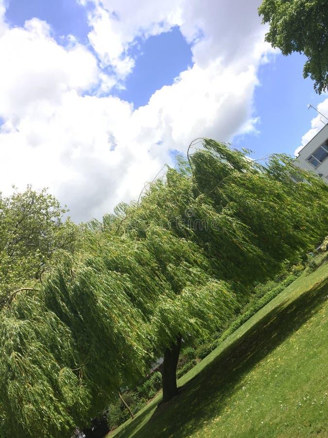 Treefree stockfotografie