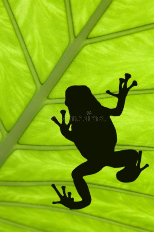 treefrog arkivfoto