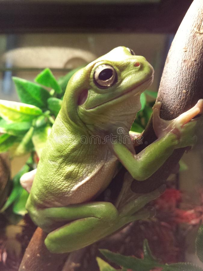 Treefrogs stock images