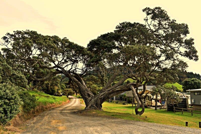 Treehead royaltyfri fotografi