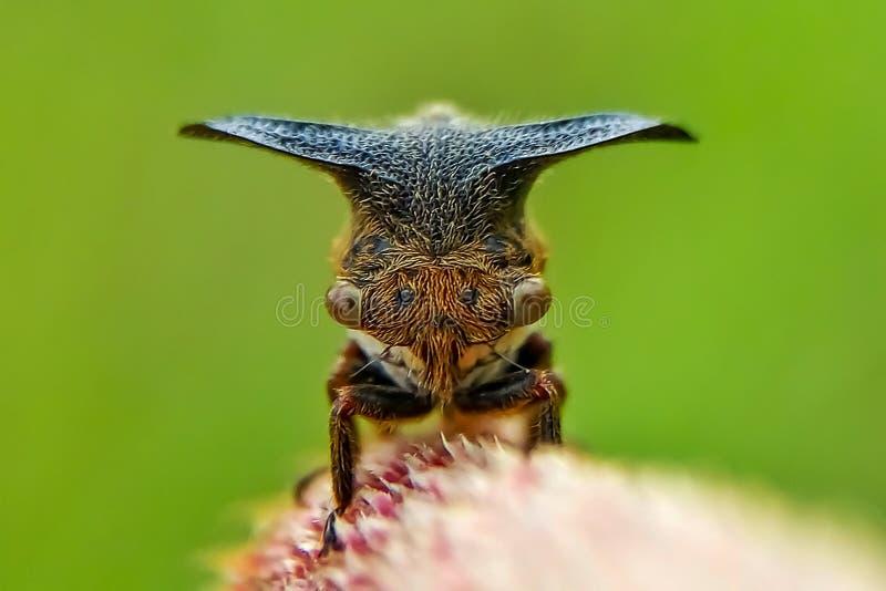 Treehopper stock images