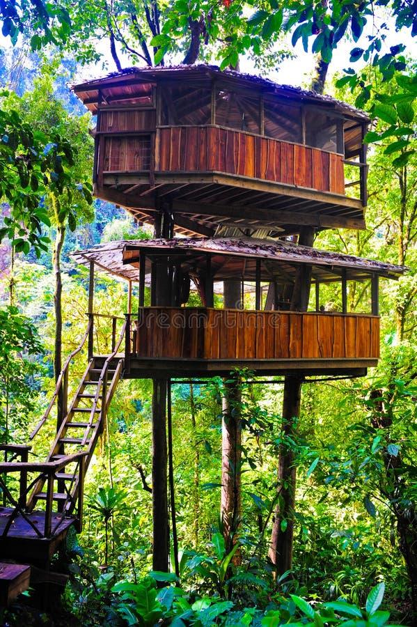 treehouse royaltyfri foto