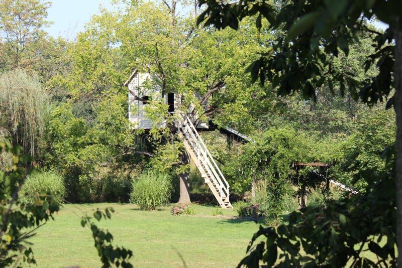 Treehouse arkivbilder
